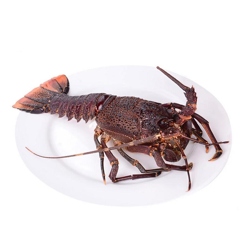 节肢动物 虾 南非龙虾_节肢动物 虾 南非龙虾